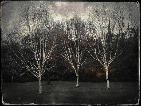 Wall Art - Photograph - Three Birch Trees by Dave Bowman