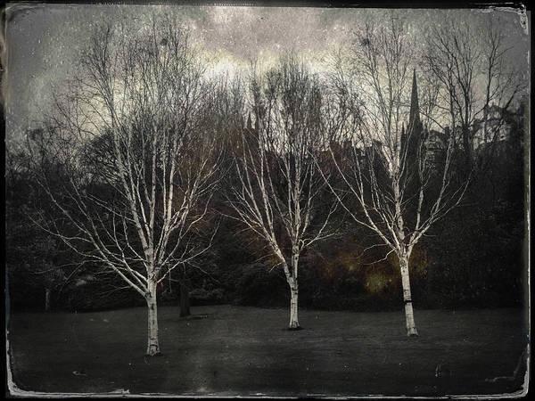 Three Trees Photograph - Three Birch Trees by Dave Bowman