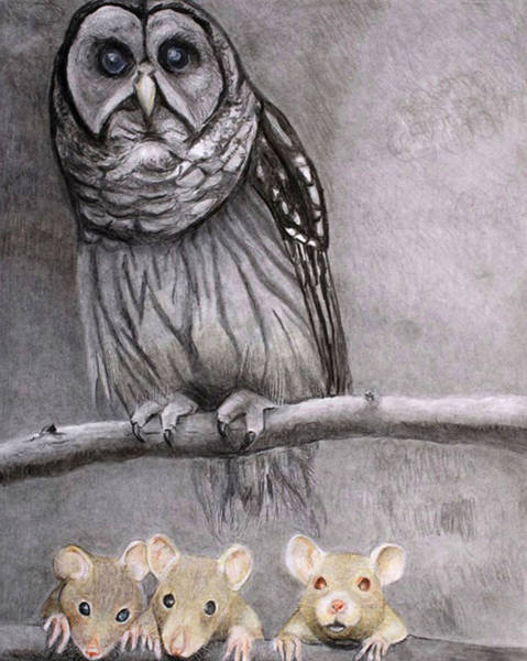 Drawing - Three Blind Mice by Tim Ernst