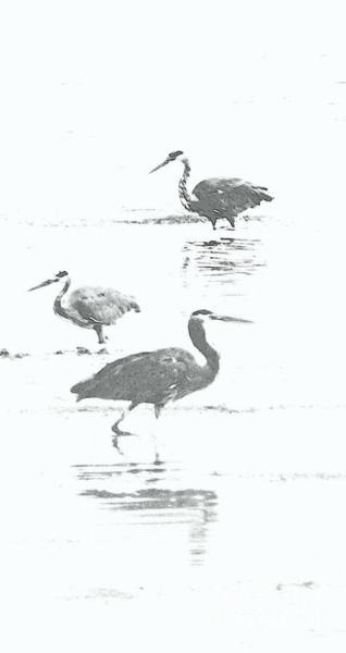 Three Blue Herons Art Print