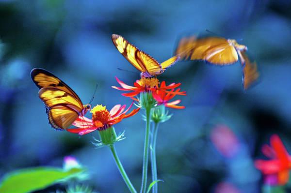 Three Butterflies Art Print by By Ken Ilio