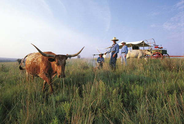 Domestic Animals Photograph - Three Cowboys Standing By Texas by Sylvain Grandadam