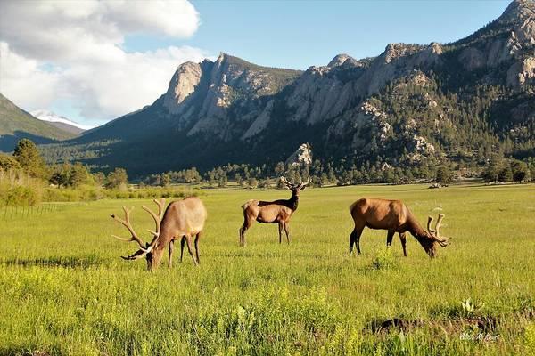 Wall Art - Photograph - Three Elk In Rmnp by Alicia Knust