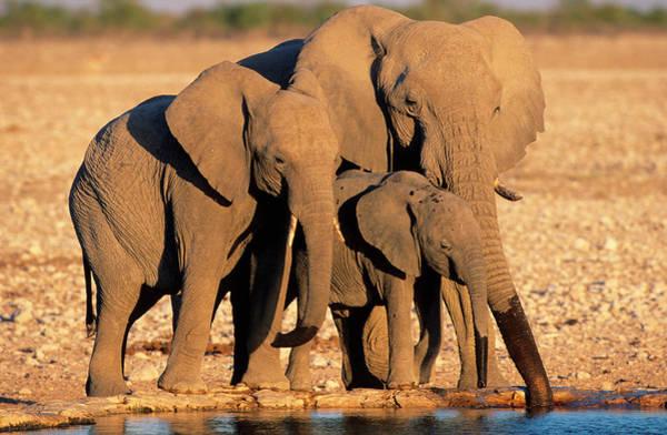 Safari Animal Photograph - Three Generations Of African Elephants by Martin Harvey