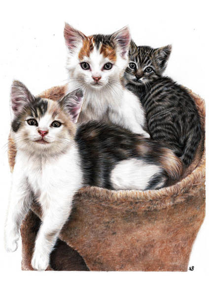 Furry Drawing - Three Happy Kittens by Sema Martin