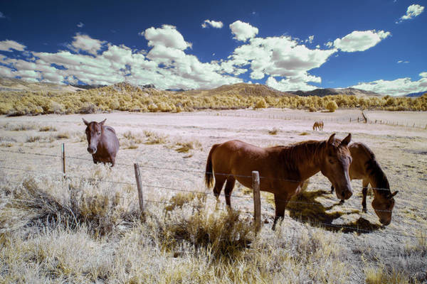 Wall Art - Photograph - Three Horses In Colorado by Jon Glaser