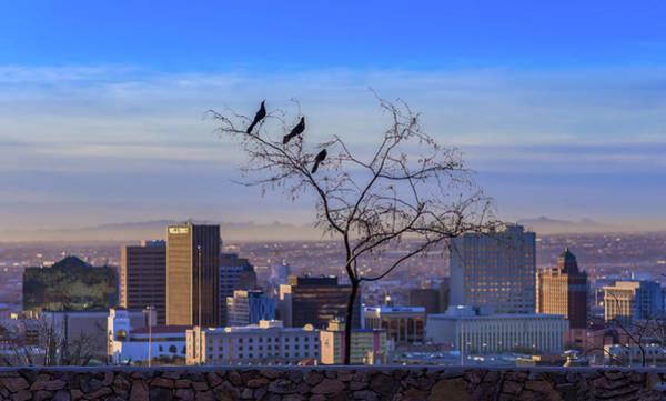 Downtown El Paso Photograph - Three In A Tree by Ken Blystone