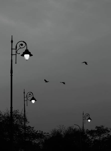 Photograph - Three Lamps Three Birds by Prakash Ghai