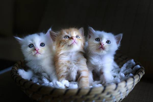 Photograph - Three Little Kitties by Top Wallpapers