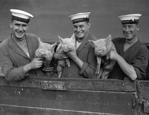 Pig Photograph - Three Little Pigs by Fox Photos