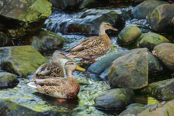 Digital Art - Three Mallard Ducks Swimming In A Stone Filled Brook. by Rusty R Smith