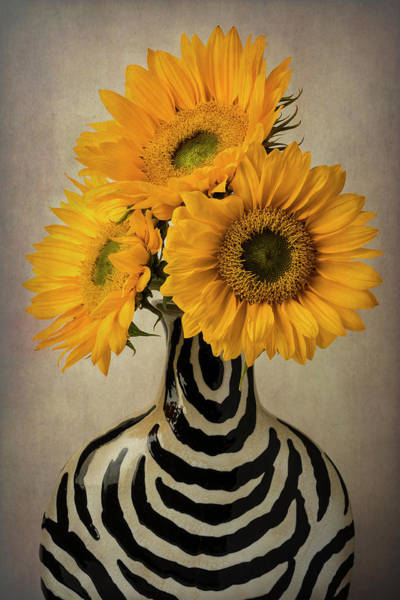 Wall Art - Photograph - Three Sunflowers In Striped Vase by Garry Gay