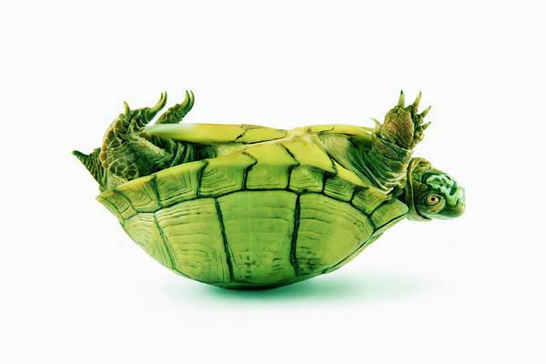 Box Turtle Photograph - Three Toed Box Turtle Terrapene by Steve Mcalister
