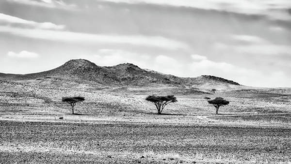 Photograph - Three Trees Along The Road - Morocco by Stuart Litoff