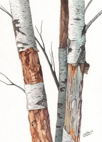 Painting - Three Wild Birch Trees In Watercolor by Christopher Shellhammer