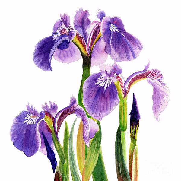 Freeman Wall Art - Painting - Three Wild Irises Square Design by Sharon Freeman