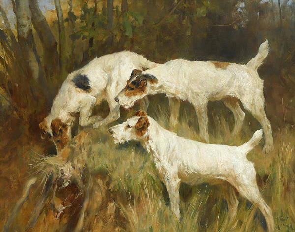Fox Terrier Wall Art - Painting - Three Wire Fox Terriers Working A Hole by Arthur Wardle