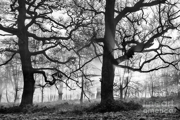 Wall Art - Photograph - Through A Winter Wood by Tim Gainey