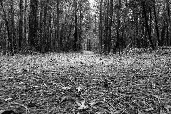 Photograph - Through The Forest by Doug Camara
