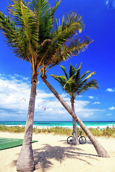 Photograph - Through The Palm Trees At Fort Lauderdale Beach by John Rizzuto