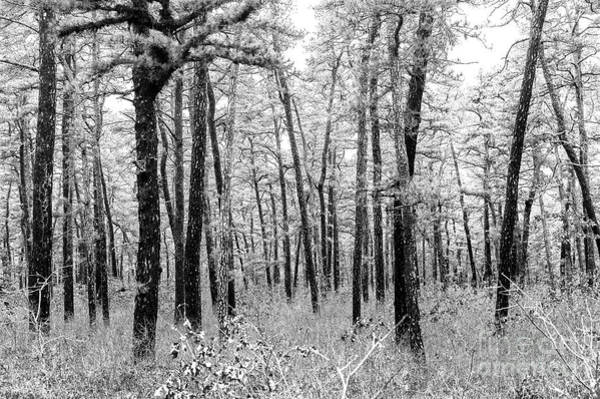 Photograph - Through The Pinelands New Jerse by John Rizzuto