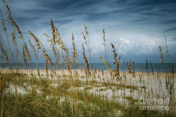 Photograph - Through The Sea Oats by Judy Hall-Folde