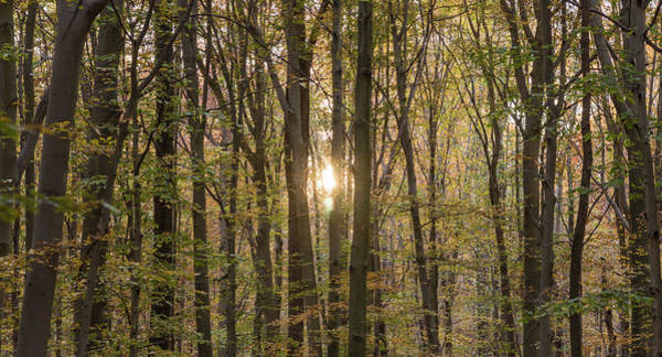 Photograph - Through The Trees by Kristopher Schoenleber