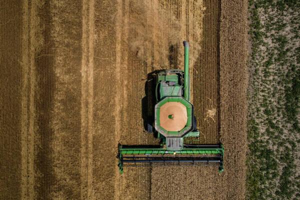 Through Wheat Art Print
