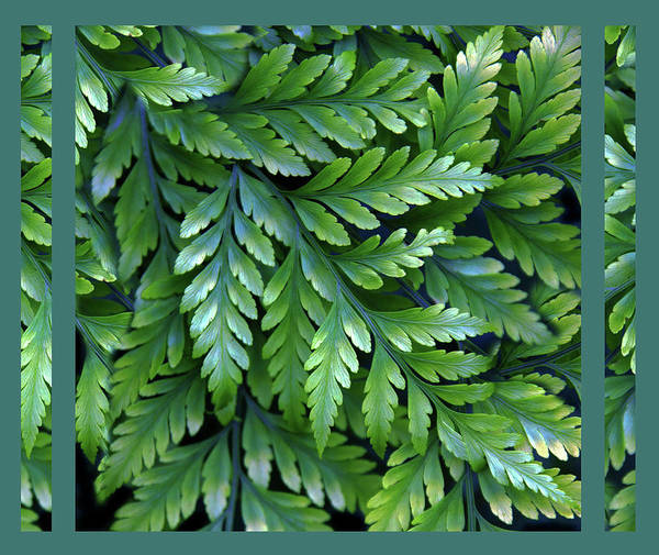 Wall Art - Photograph - Verdant Fern by Jessica Jenney