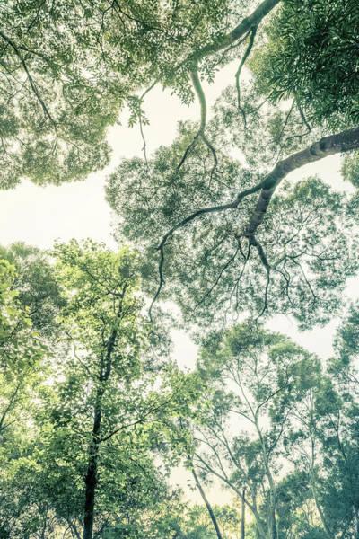 Photograph - Tianzhong Forest Tapestry by Alexander Kunz
