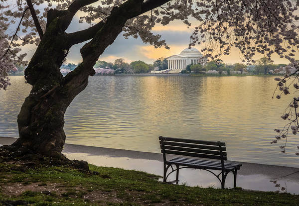 Wall Art - Photograph - Tidal Basin With Cherry Blossoms And by Drnadig