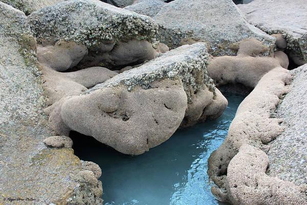 Photograph - Tidal Pool 1 by Megan Dirsa-DuBois