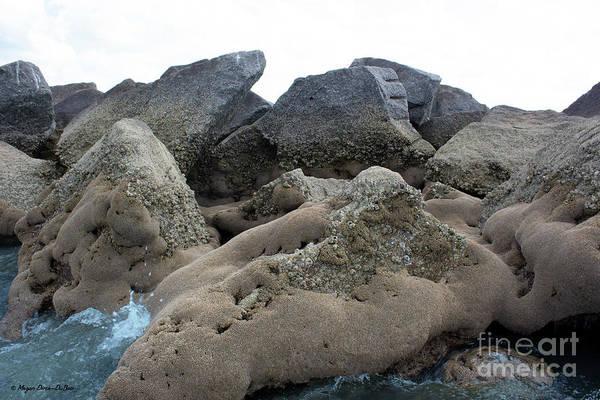 Photograph - Tidal Pool 3 by Megan Dirsa-DuBois