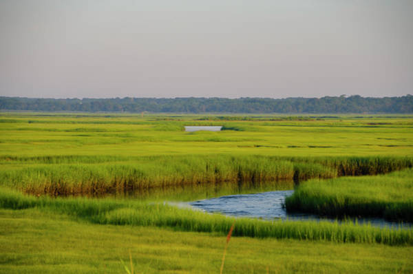 Photograph - Tidal Wetlands - New Jersey by Bill Cannon