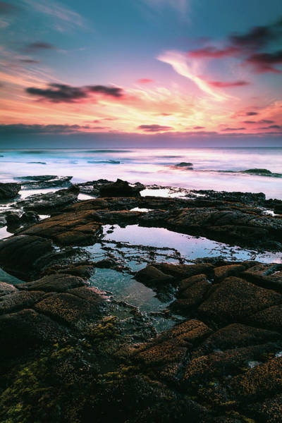 Photograph - Tide Pools Of La Jolla by Jason Roberts