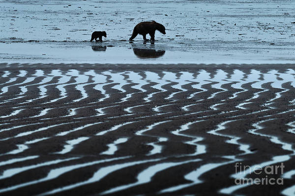 Wall Art - Photograph - Tide's Out - Lake Clark-ak  by Sandra Bronstein