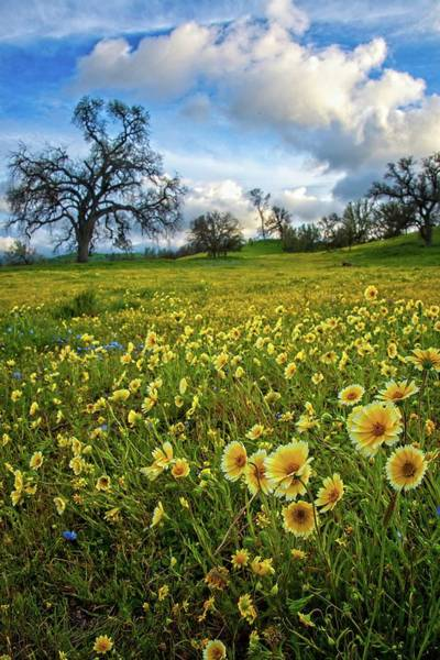 Photograph - Tidy Tips At Shell Creek - Superbloom 2019 by Lynn Bauer