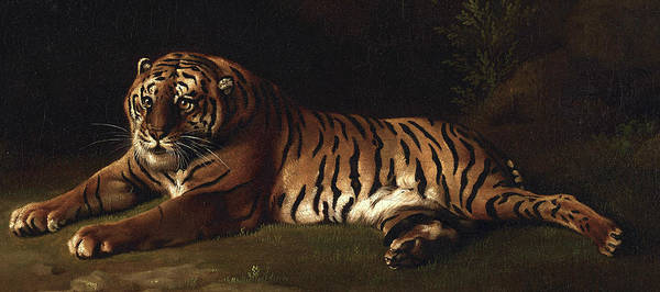 Wall Art - Painting - Tiger, 1769 - 1771 by George Stubbs