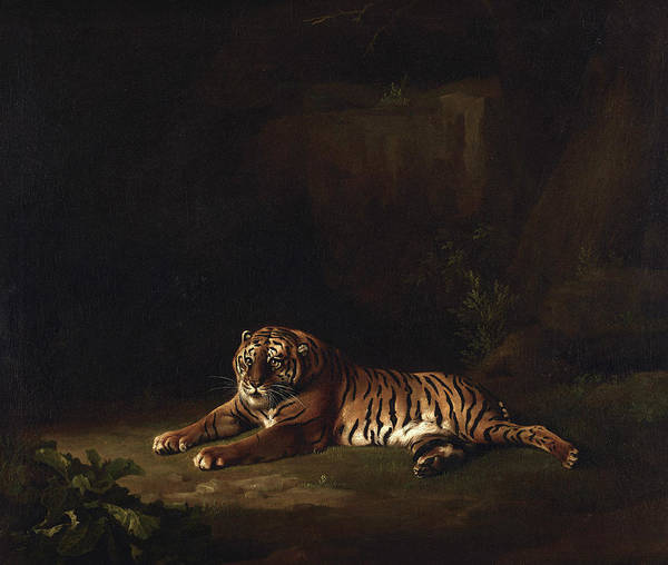 Wall Art - Painting - Tiger, 1771 by George Stubbs