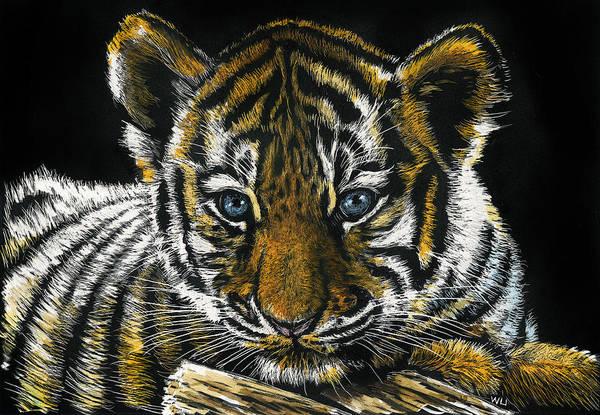 Drawing - Tiger Cub by William Underwood
