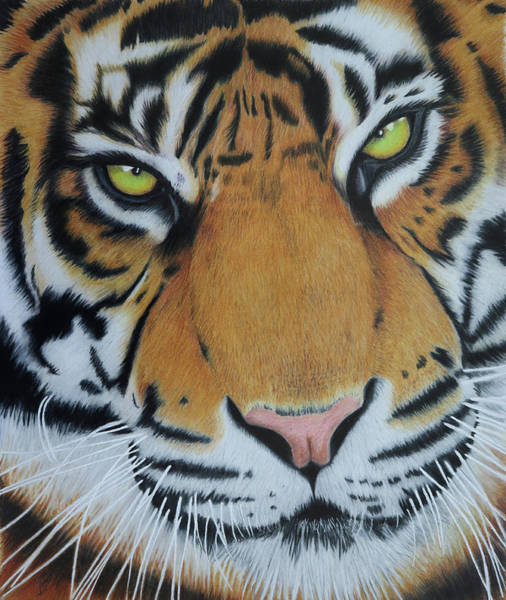 Painting - Tiger Eyes  by Melanie Feltham