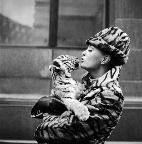 Hat Photograph - Tiger Lady by Central Press
