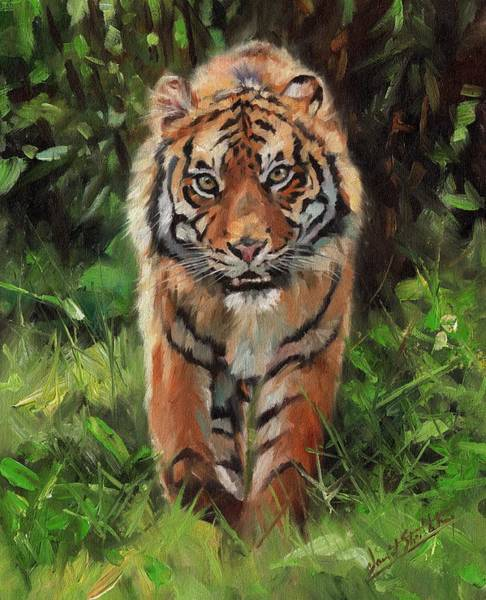 Bengal Tiger Painting - Tiger Out Of The Bush by David Stribbling