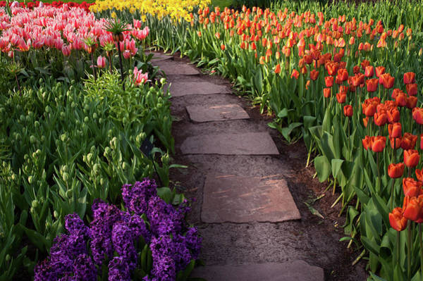 Photograph - Tiled Path Through Flowerbeds In Keukenhof 1 by Jenny Rainbow