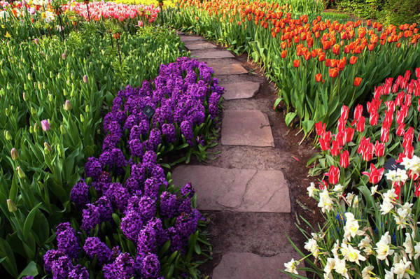 Photograph - Tiled Path Through Flowerbeds In Keukenhof by Jenny Rainbow