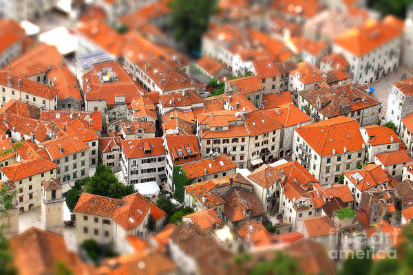 Wall Art - Photograph - Tilt-shift Miniature Effect Of Bird Eye by Katatonia82