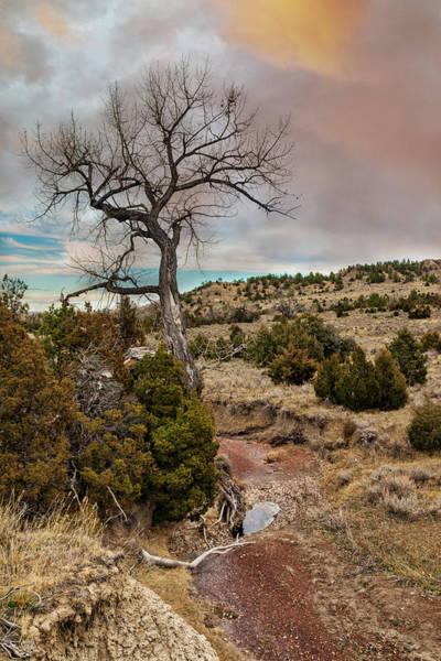 Wall Art - Photograph - Timber Creek Ranch by Lorraine Baum