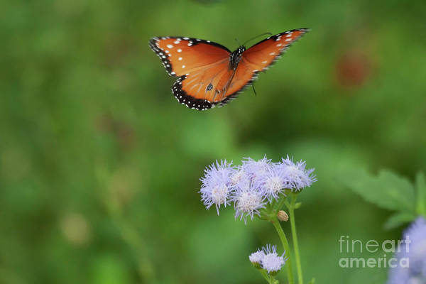 Wall Art - Photograph - Time Flies By Like The Flight Of A Butterfly by Ruth Jolly