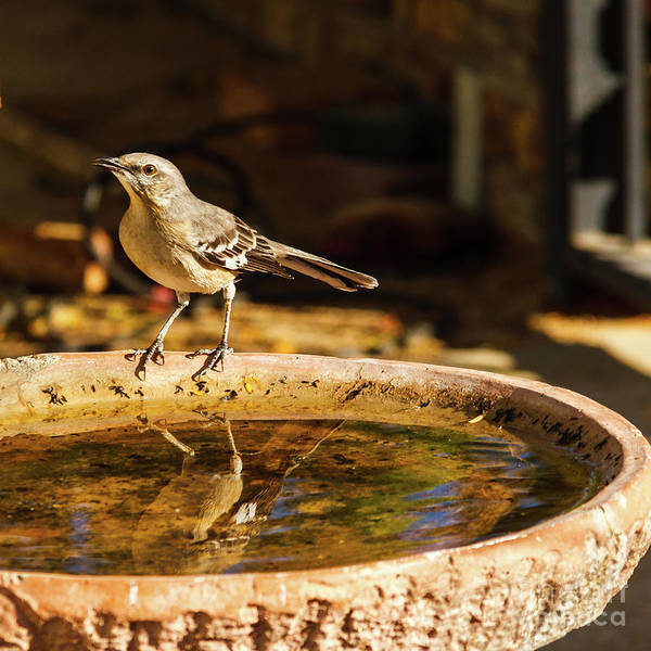 Wall Art - Photograph - Time For A Bath by Robert Bales