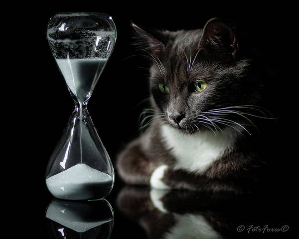 Photograph - Time Keeper by Alexander Fedin